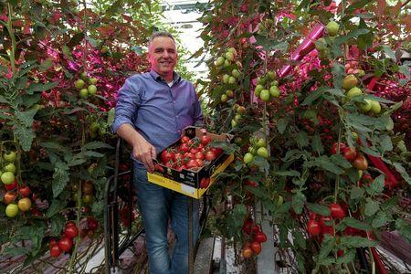 Wim Peters, a tomato farmer, holds up a box full of Roma tomatoes in a greenhouse in Someren, near Eindhoven, the Netherlands