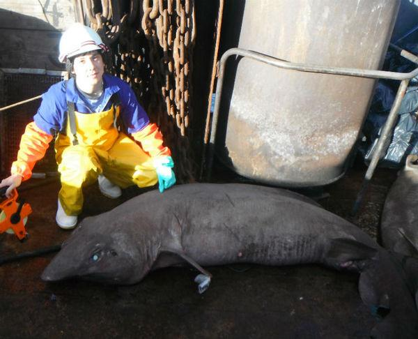 Fishing Expedition Finds Weird Deep-Sea Sharks
