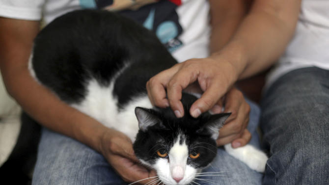"Morris sit on the lap of Diego Cruz, left, as Sergio Chamorro pets Morris, at their home in Xalapa, Mexico, Saturday, June 15, 2013. Put forth as candidate by Camacho and a group of friends after they became disillusioned with the empty promises of politicians, Morris, a black-and-white cat with orange eyes, is running for mayor of Xalapa in eastern Mexico with the campaign slogan ""Tired of Voting for Rats? Vote for a Cat."" And he is attracting tens of thousands of politician-weary, two-legged supporters on social media. (AP Photo/Felix Marquez)"