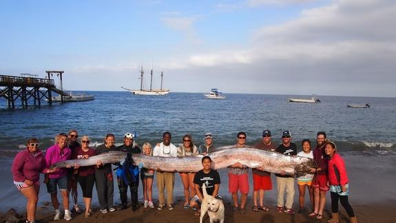 Giant Oarfish Dissected! Worms, Eggs Found Inside