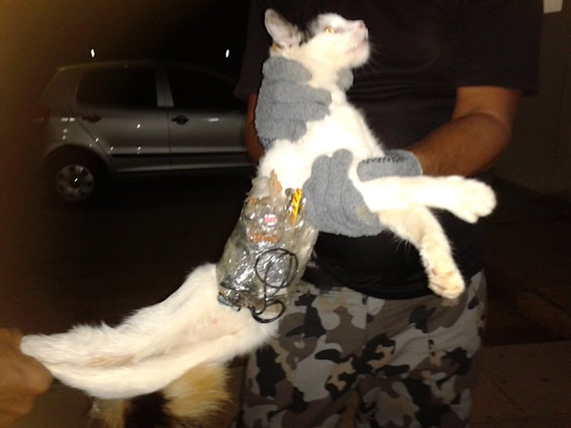 In this photo taken with a cell phone early Monday, Dec. 31, 2012, and released by Brazil's General Superintendency of Prisons of Alagoas (SGAP), guards hold a cat that has items taped to its body at