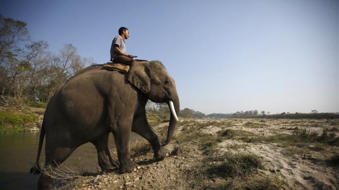 A mahout rides on his elephant as they cross Rapti River while returning from Chitwan National Park ahead of the Elephant festival at Sauraha in Chitwan