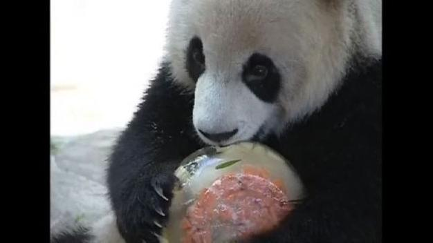 Watch: Animals beat the heat at a Chinese zoo