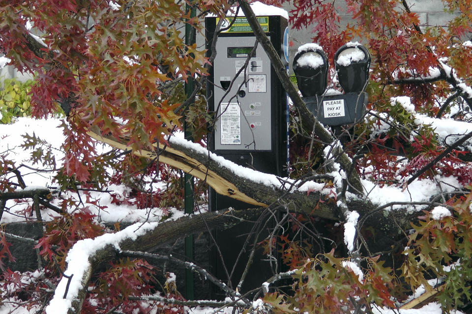 Snow and autumn leaves cover fallen limbs after a snowstorm in downtown Concord, N.H., Sunday, Oct. 30, 2011. (AP Photo/Holly Ramer)