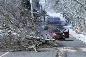 A fallen tree taken down by ice and snow blocks a roadway in Maple Glen