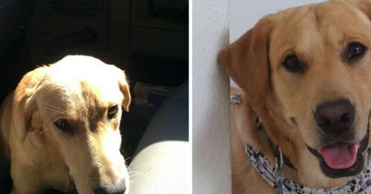 15 Rescue Dog Transformations To Melt Your Heart