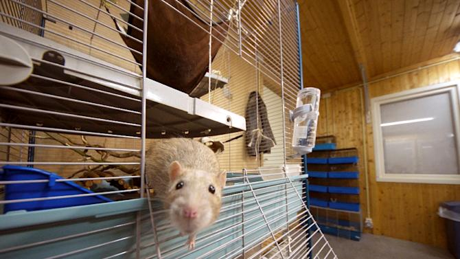 French scientists published evidence of pesticide contamination of lab rat feed which they said discredited historic toxicity studies, though commentators questioned the analysis