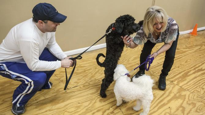 In this Feb. 14, 2013 photo, Lola, an Australian labradoodle, is seen playing with Karen McDillon during a class at the K9 Fit Club in Chicago as Jay Melnik, left, owner of the labradoodle, and McDillon's dog, a maltipoo named Teddy, look on. (AP Photo/Teresa Crawford)