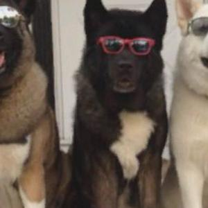 """Blind dog gets help from her """"seeing eye dogs"""""""