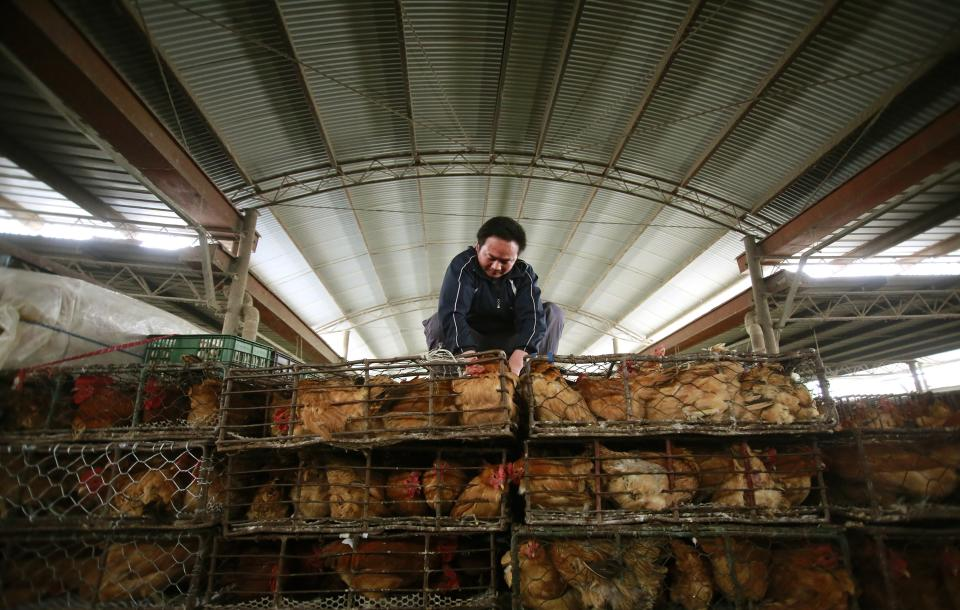 Bird flu 101: How bad is the new H7N9 strain?