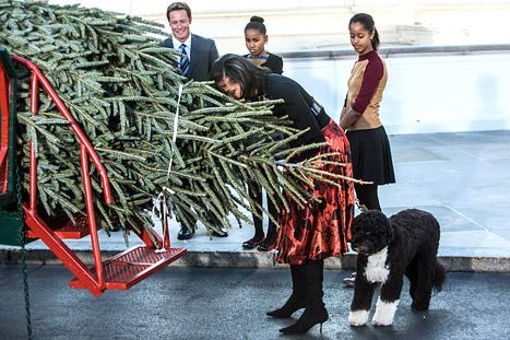PICTURE: Michelle Obama, Dog Bo Welcome, Sniff White House Christmas Tree