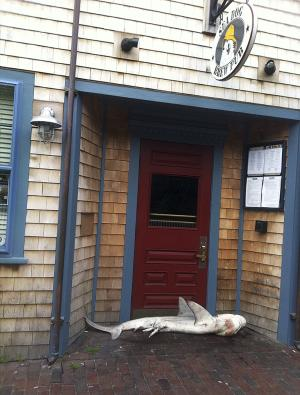 In this photo provided by pub manager Jimmy Agnew, a dead shark lies at the entrance of the Sea Dog Brew Pub Thursday morning, Aug. 1, 2013 in Nantucket, Mass. It was not known how the shark arrived at the door of the pub. It was removed by the town's department of public works. (AP Photo/Jimmy Agnew)