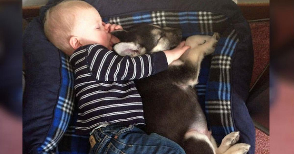 17 Adorable Pics Of Kids Who Think They're Animals