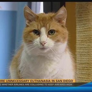 No more unnecessary euthanasia in San Diego