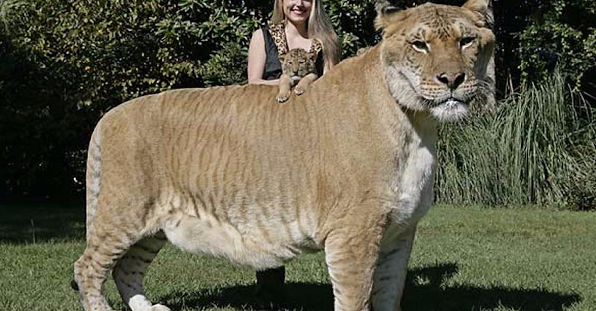 16 Awesome Animal Hybrids That Are Totally Real
