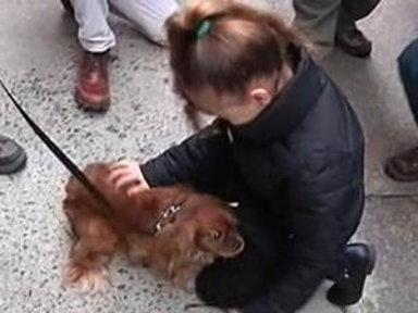 Dog Reunited With 7-year-old Owner