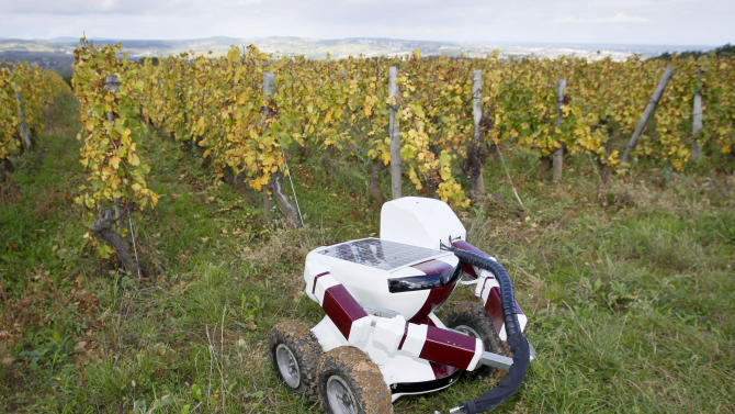 The Wall-Ye prototype, a robot designed to prune vines, is seen  in the Pouilly Fuisse vineyard during a press presentation near Macon