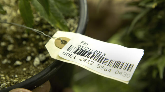 This Jan. 26, 2013 photo shows a a bar code attached to a marijuana plant at a grow house in Denver. The bar codes are assigned to each plant and follow it through the growing and distribution process. Washington state is considering the use of a similar tracking system. (AP Photo/Ed Andrieski)