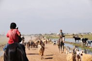 Shepherds ride their horses near the Turkish-Syria border. Turkey&#39;s Prime Minister Recep Tayyip Erdogan again warned Syria it would pay a big price for further attacks