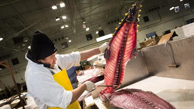 A fishmonger peels the spine from a tuna at the Fulton Fish Market, Friday, March 29, 2013, in New York. The Fulton Fish Market, located in the Hunts Point neighborhood of the Bronx, is the world's largest after Tokyo. In this football-field size refrigerated building, time and money is measured in thousand-dollar pieces of salmon whose price-for-quality is negotiated on the spot. The product goes to the buyer instantly and is trucked to restaurants or retail vendors. (AP Photo/John Minchillo)