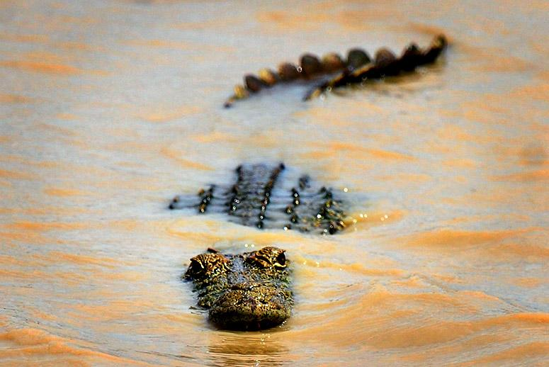 A Warming World Could Be a Crocodile-Infested One