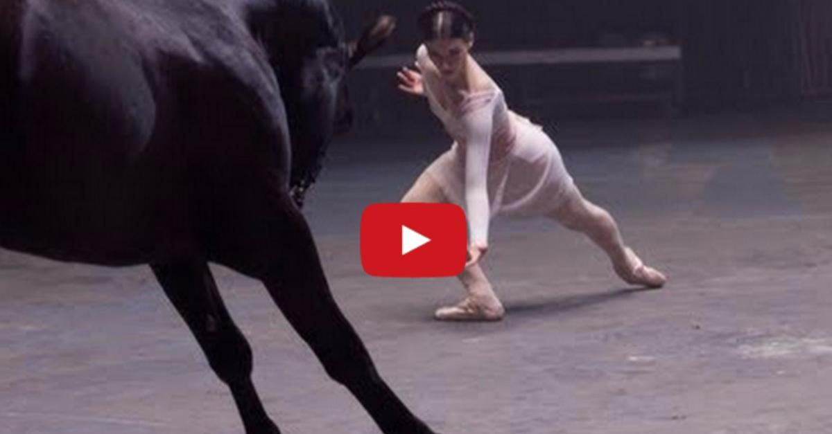 Horse Does THIS When The Ballerina Starts To Dance