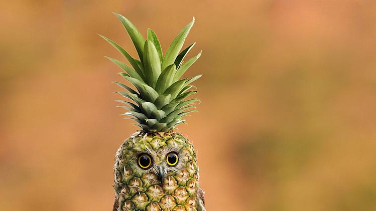 Baby pineapple owl