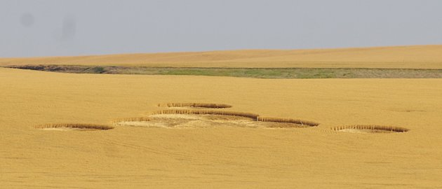 In this July 30, 2012 photo provided by The Wilbur Register, crop circles are shown in a wheat field owned by Greg and Cindy Geib near Wilbur, Wash. The circles were first noticed on July 24, 2012. Cr