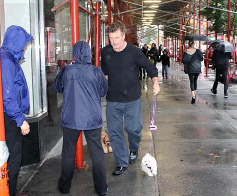 Hurricane Sandy: Alec Baldwin Walks Tiny Dogs Through Storm!