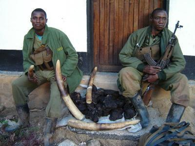 Elephants Vanish in Congo Reserve