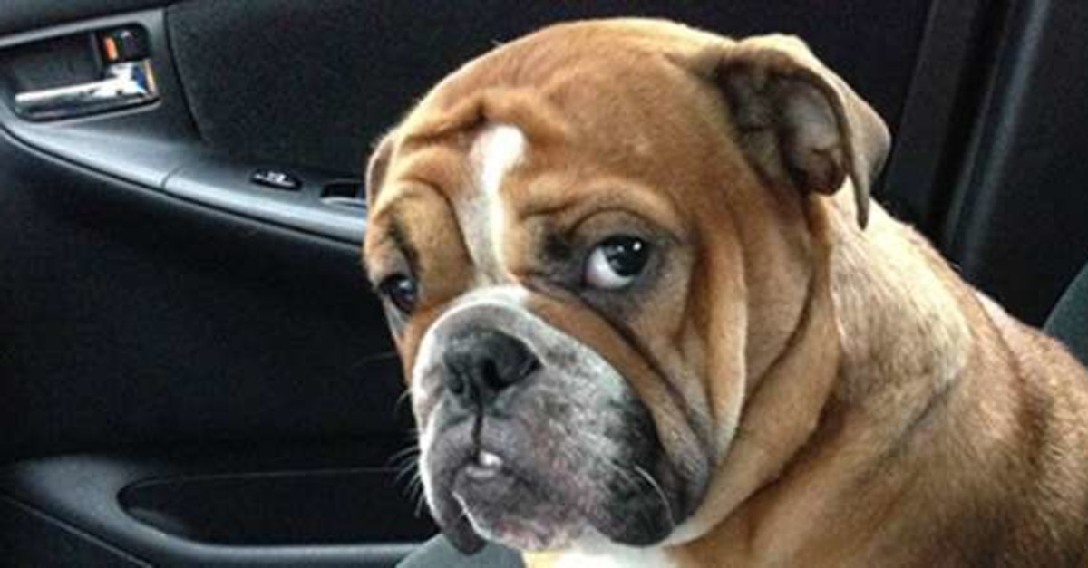 Hilarious Reactions From Dogs Who Are At The Vet