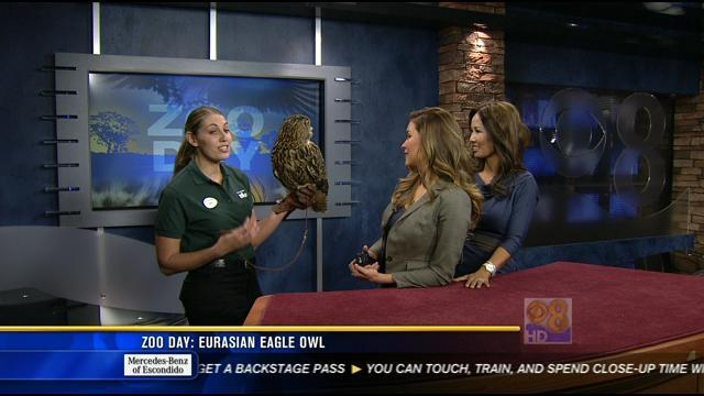 Zoo Day: Eurasian eagle owl