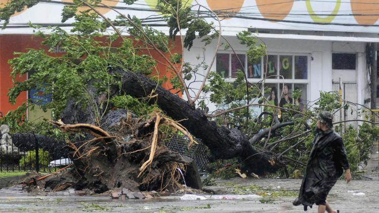A man walks past a tree uprooted by strong winds brought by super Typhoon Haiyan that hit Cebu city