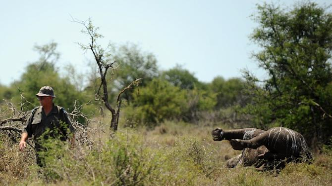 Since 2007, famed Kruger National Park in South Africa has lost hundreds of rhinoceroses to poachers