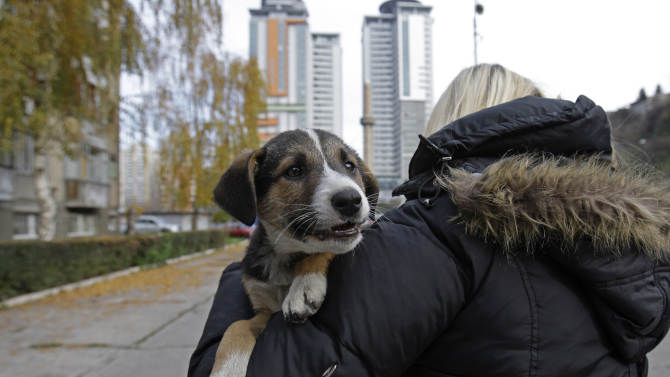 Bosnian animal activist Amela Turalic carries a stray dog in Sarajevo, Bosnia, Tuesday, Nov.27, 2012. Bosnia passed a law nearly four years ago banning the killing of strays, alarmed at a sharp rise in canine slaughter as wild dogs proliferated on Bosnian streets. But people ignored the law, largely because authorities failed to provide alternatives such as sterilization. Sarajevo has become the only city in Bosnia where the law is respected _ thanks to a new city-funded dog shelter run by animal protection activist Amela Turalic that performs sterilizations. (AP Photo/Amel Emric)