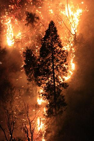 Experimental Forests Could Lessen Toll of Wildfires