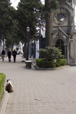 Recoleta Cemetery, Buenos Aires