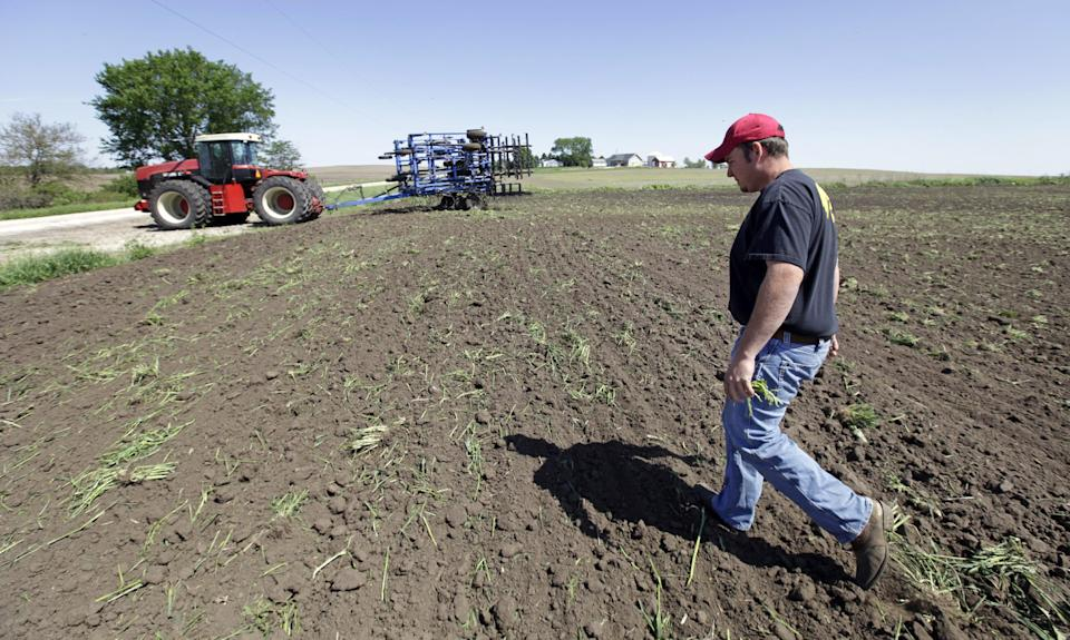 Mike Young walks through a field after preparing it for corn planting, Thursday, May 10, 2012, near Farrar, Iowa. The U.S. Department of Agriculture estimates a record corn crop this year, topping the previous high by 11 percent.(AP Photo/Charlie Neibergall)
