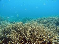Coral on Australia's Great Barrier Reef, in a picture released by the Great Barrier Reef Marine Park Authority in April 2009. More than 2,600 of the world's top marine scientists Monday warned coral reefs around the world were in rapid decline and urged immediate global action on climate change to save what remains