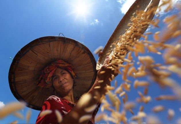 'Farmer under the Sun'…