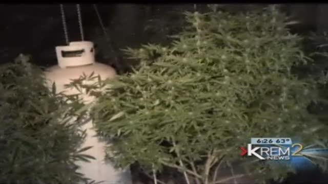 Spokane Co. pot producer expects one ounce to cost $700