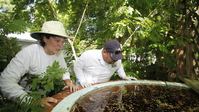 In this Thursday, Oct. 4, 2012 photo, Patti Sprague, left, and Jason Garcia, both field inspectors with the Florida Keys Mosquito Control District, inspect a backyard pond at a home in Key West, Fla. The British company Oxitec and mosquito control officials hope to release genetically modified mosquitoes to control the Aedes aegypti mosquito population, that can transmit dengue fever, without using pesticides and at relatively a low cost. But some Key West residents and environmental groups think the genetically modified mosquitoes pose a bigger threat than regular dengue or even dengue hemorrhagic fever. They worry the modified genetic material will somehow be passed to humans and the Keys ecosystem and they want more research into the potential risks. (AP Photo/Wilfredo Lee)