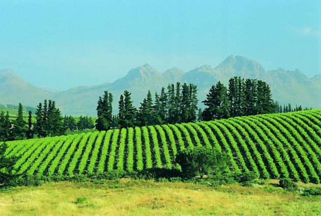 Stellenbosch South Africa wine region