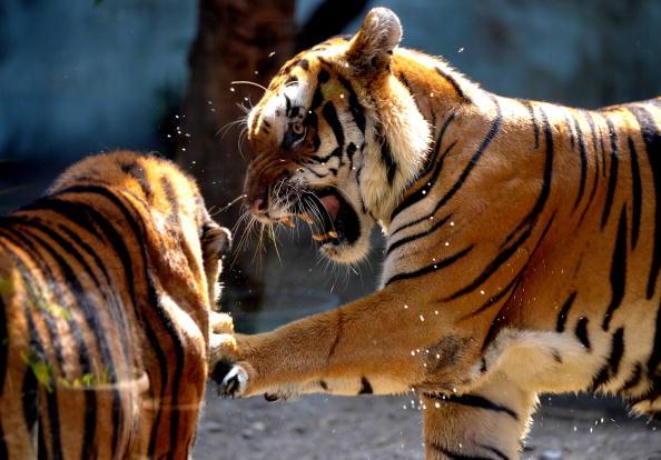10حيوانات قد لاتشاهدها بعد الان بسبب الانقراض
