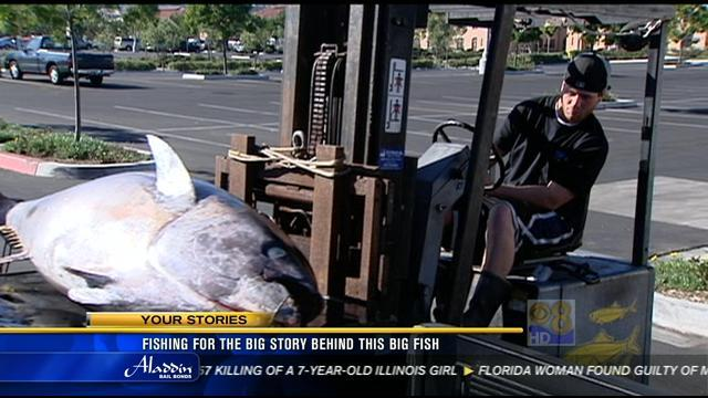Fishing for the big story behind this big fish