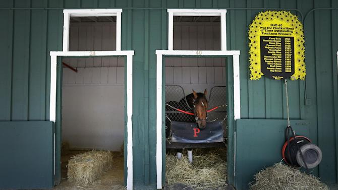 Kentucky Derby winner Orb stands in a stable after arriving at Pimlico Race Course in Baltimore, Monday, May 13, 2013. Orb is scheduled to run in the Preakness Stakes on May 18. (AP Photo/Patrick Semansky)