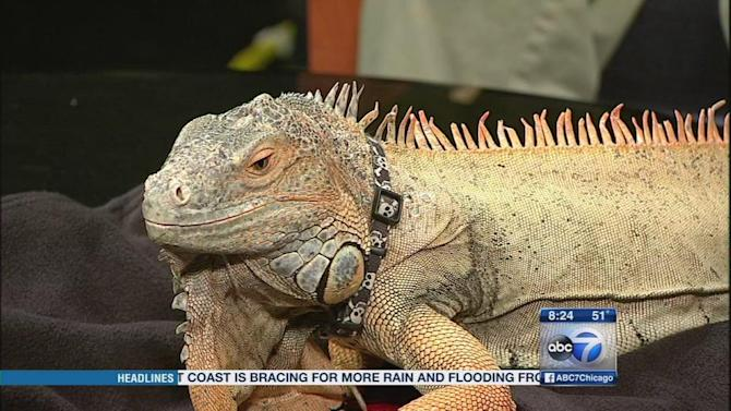 Trade show showcases thousands of reptiles