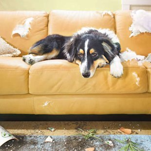 Decode Your Pet's Bad Behavior