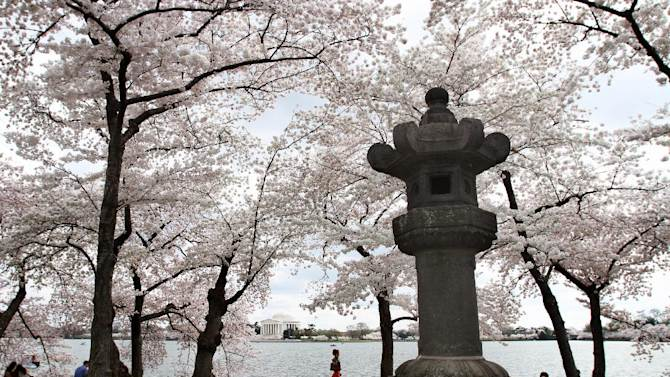 FILE - In this March 19, 2012 file photo, the 360-year-old Japanese stone lantern that is lit each year at the National Cherry Blossom Festival to commemorate the relationship between the US and Japan is seen on the Tidal Basin in Washington across from the Jefferson Memorial. The lantern will soon have a more prominent place on the National Mall. Trust for the National Mall, a nonprofit group working to improve the mall is holding a ceremonial groundbreaking Sunday for a new granite plaza and walking paths to display the historic lantern. The lantern sits among some of the original flowering cherry trees that were a gift from Japan 101 years ago. (AP Photo/Jacquelyn Martin, File)