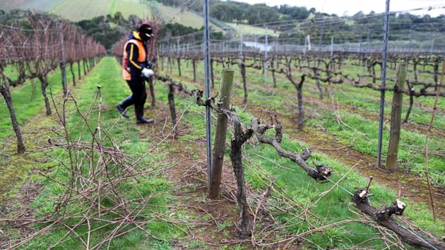 Oenophile Alert: Wine Shortage Looms (ABC News)